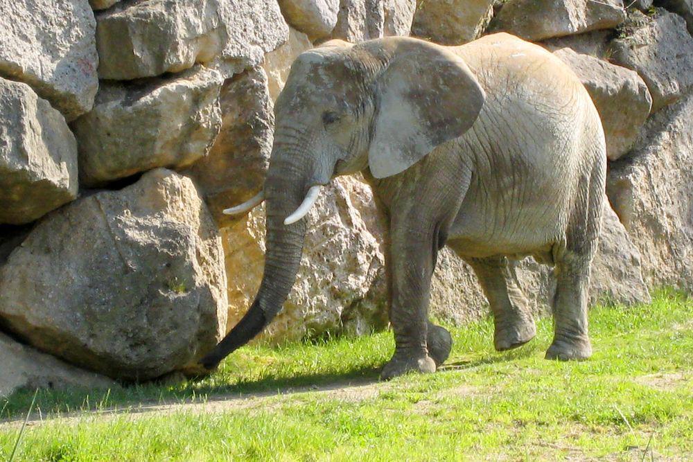 Велотур Пассау-Вена - Зоопарк Шёнбрунн в Вене